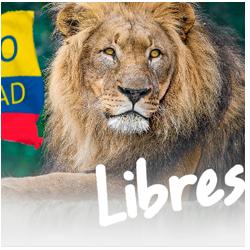Libres No