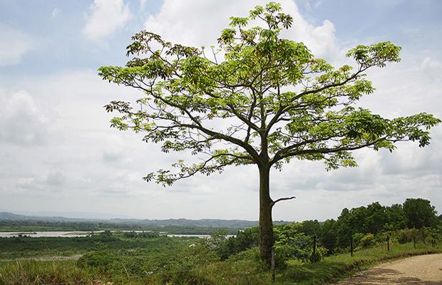 bajocauca-rural-620x400