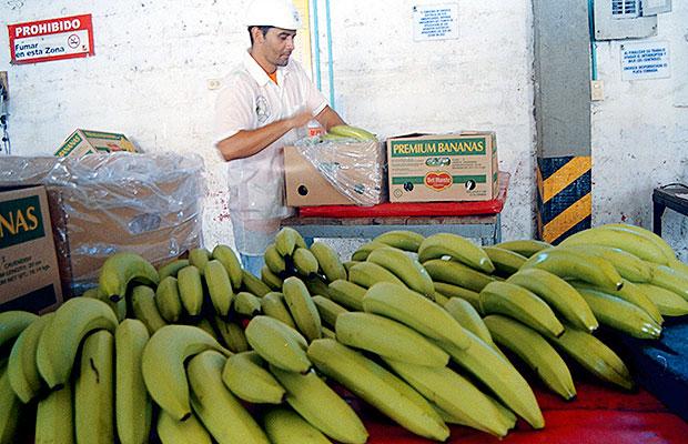 bananeros del no 4