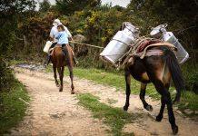 campesino-parques-1.jpg