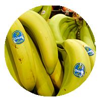 compulsas bananeras