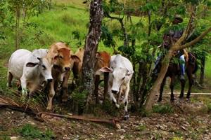 Hasta el momento, hay predios del Fondo Ganadero de Córdoba en Tulapa que no han sido legalizados.