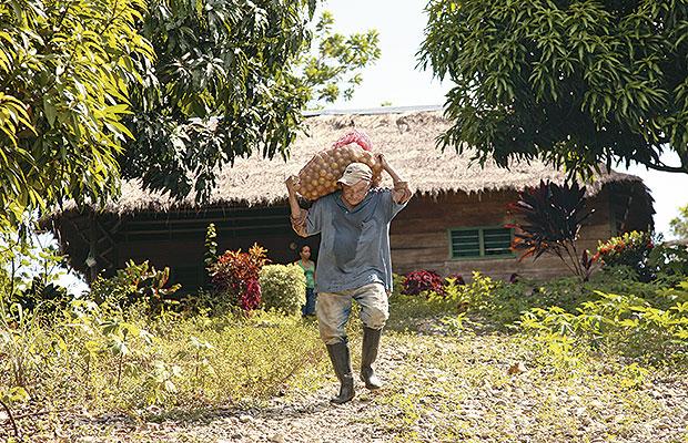 reforma rural cc 2