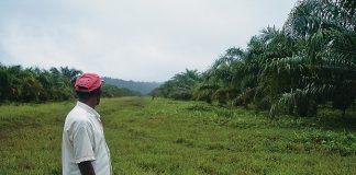 sentencia-palmicultores-620x400-4.jpg