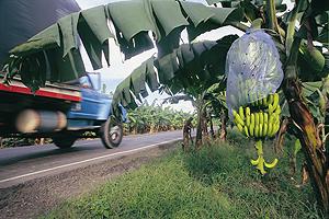 zona-bananera-1-300x200