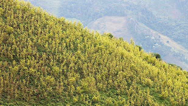 Cultivos de coca en Briceño, Antioquia