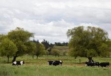 Restitución de tierras en Urabá
