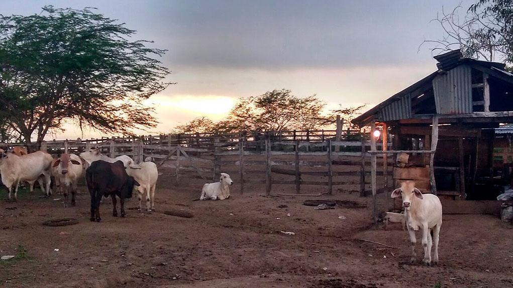 Restitución de tierras en Chibolo, Magdalena