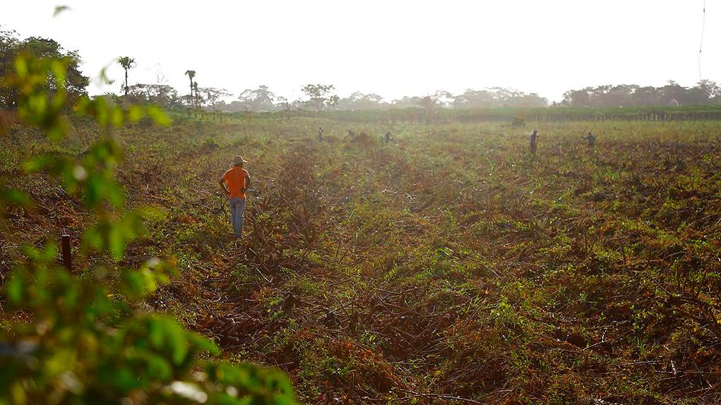 Decreto tierras para excombatientes de las Farc
