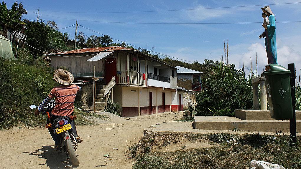 Sustituciòn de cultivos de coca en Birceño, Antioquia.
